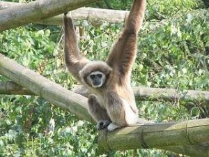 gutsy-gibbon